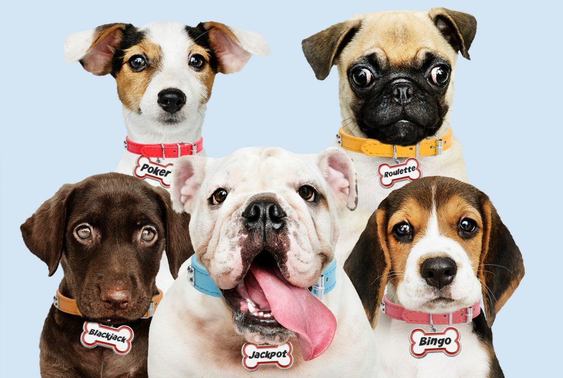 Dogs gambling names